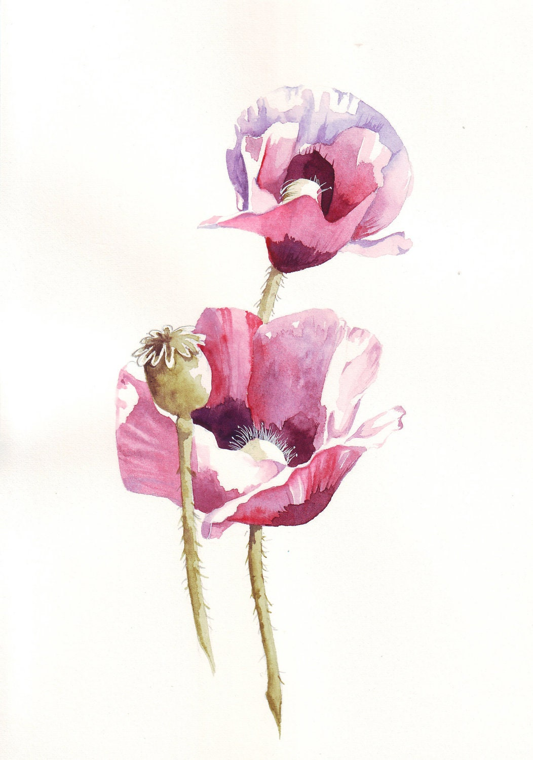 Botanical Art Poppy watercolor painting (print)