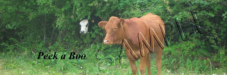 Peek a Boo Cow Bookmark