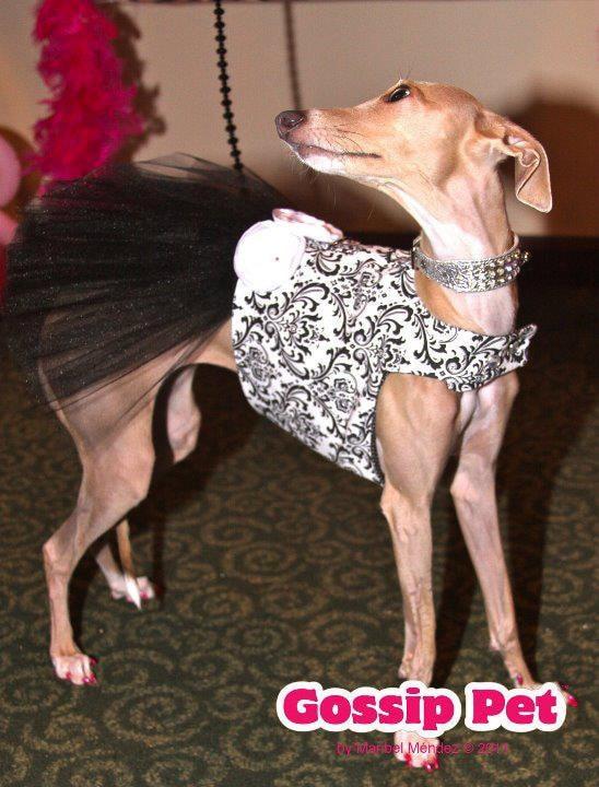 Черно-белый Дамаск Туту Harness собак платье