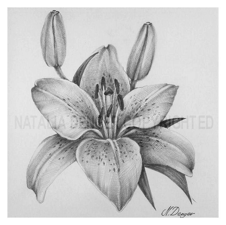 Items similar to Tiger Lily / Spring Bloom / Bulb Flower ...