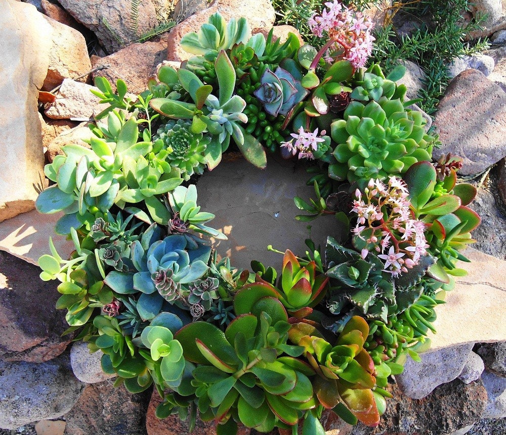 Order Now for March Delivery The Original Succulent Designs Living Succulent Wreath MEDIUM 12 inch