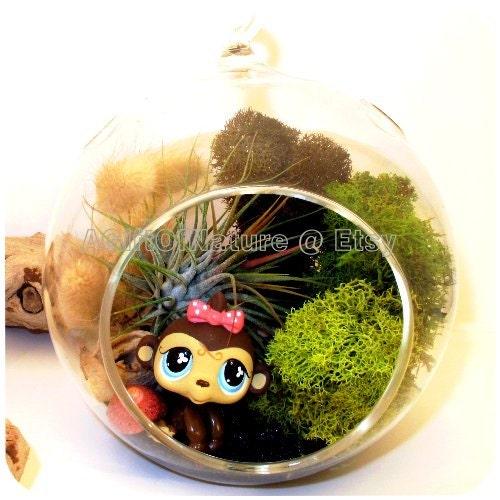 Christmas Ornament, Hanging AIR PLANT KIT, Tillandsia Terrarium Glass Globe Orb, Rainforest Monkey, Childrens Gift Housewarming Gift For Him - AGiftofNature