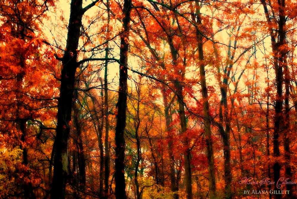 Misty Woods- Fine Art Photography print 5x7 by Alana Gillett- Fall Autumn Red Tangerine Burnt Orange Citrine Trees Dreamy Wall Art - MariaRoseCollection