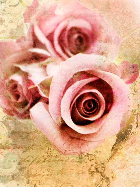 Розовые розы прекрасно поздравительная открытка искусства