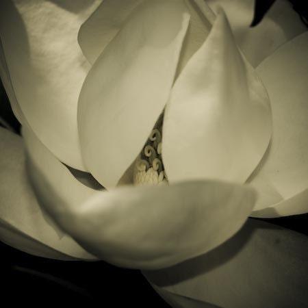 magnolia's secret