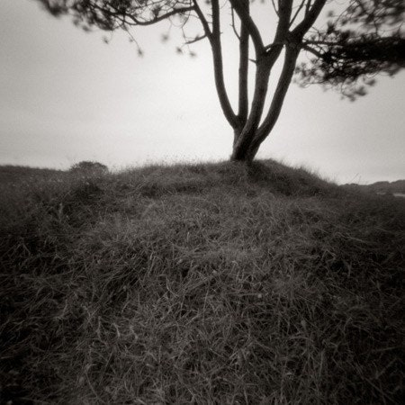 windy tree 6X6 pinhole B W photography