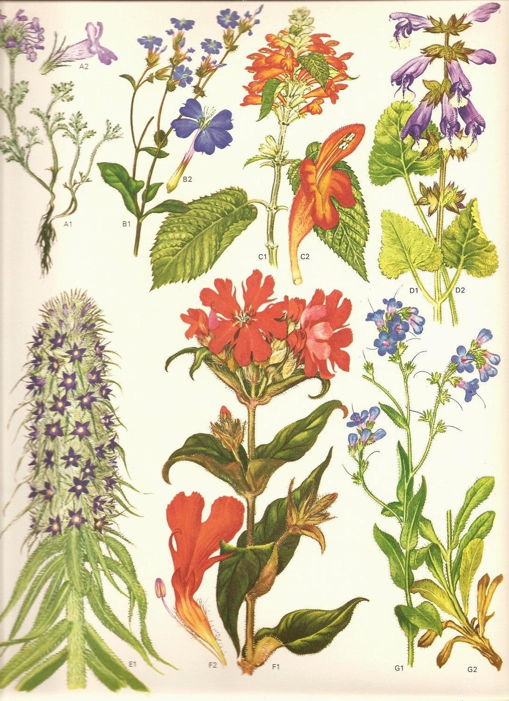 Урожай 1970 Искусство печати книга диких цветов Искусство печати 105 Красивые цветы Blooms Оранжевый Красный Фиолетовый Синий Многие садовые растения