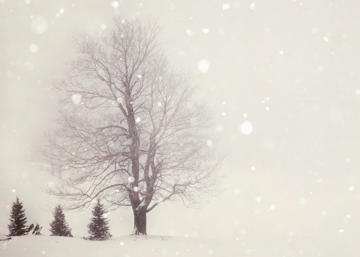 Snow Flurries - Winter Photography, Pale Ivory White, Trees, Woodland Photograph, Landscape, Nature Photography - EyePoetryPhotography