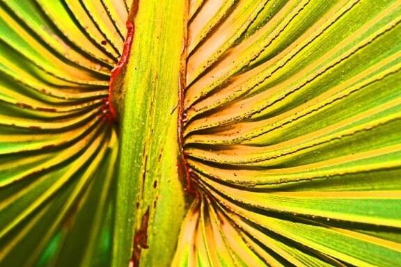 8X10 fine art print metallic macro photography red yellow neon leaf - Dabblingstuff
