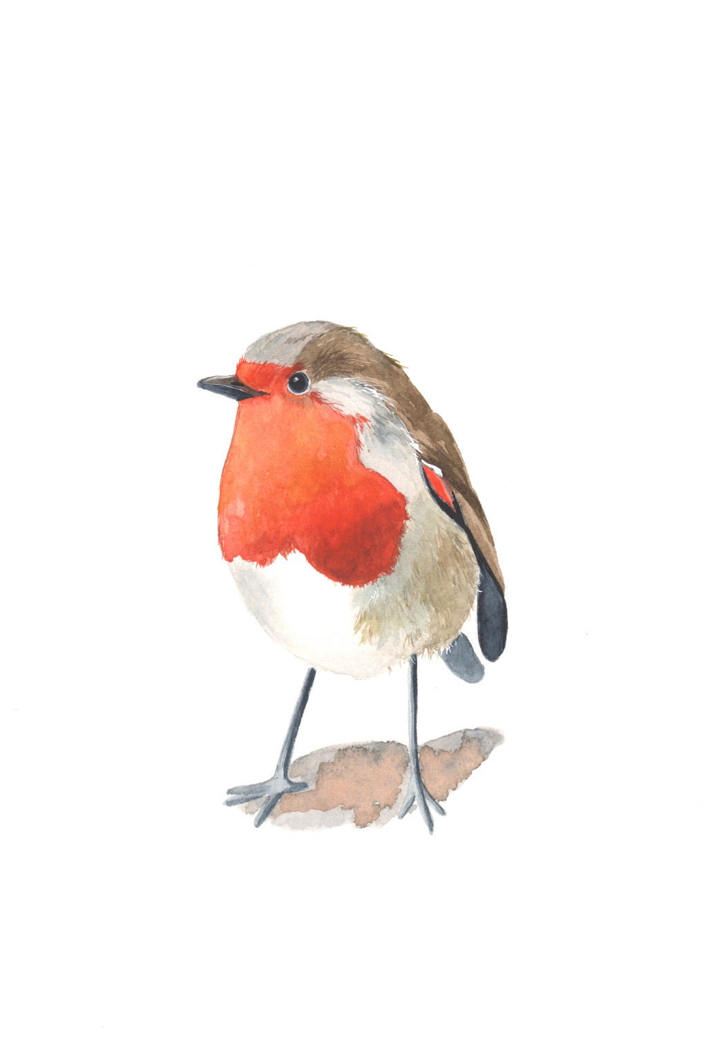 Robin Painting-  R002 Bird Print of watercolor painting A4 - Splodgepodge