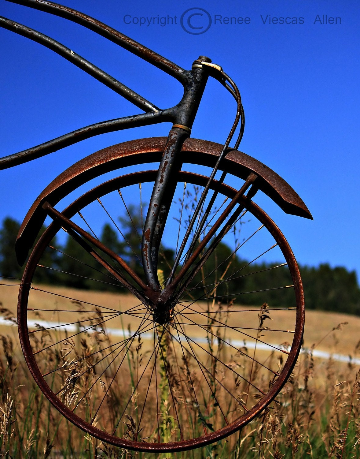 Bicycle 8 x 10 Photograph