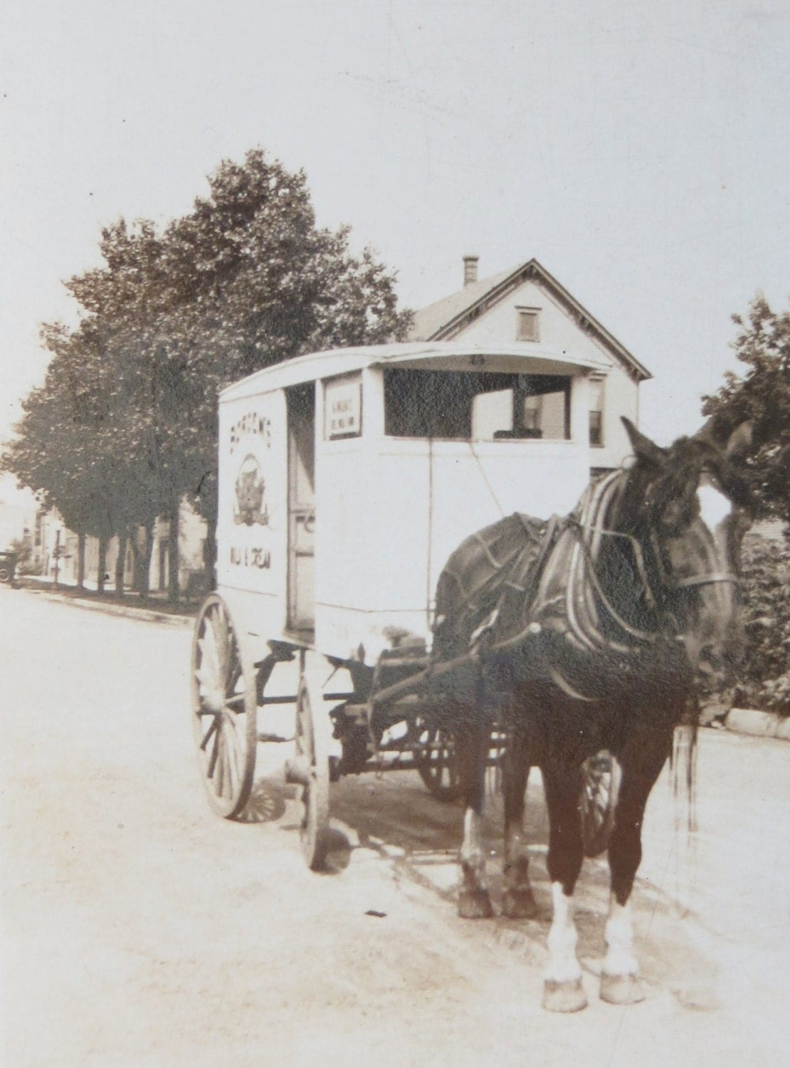 Vintage 1920's Borden's Dairy Horse Drawn Delivery Cart Snapshot Photo - InteriorVintage