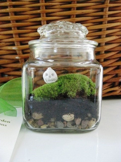 Scary Harry Holloween Pumpkin Terrarium