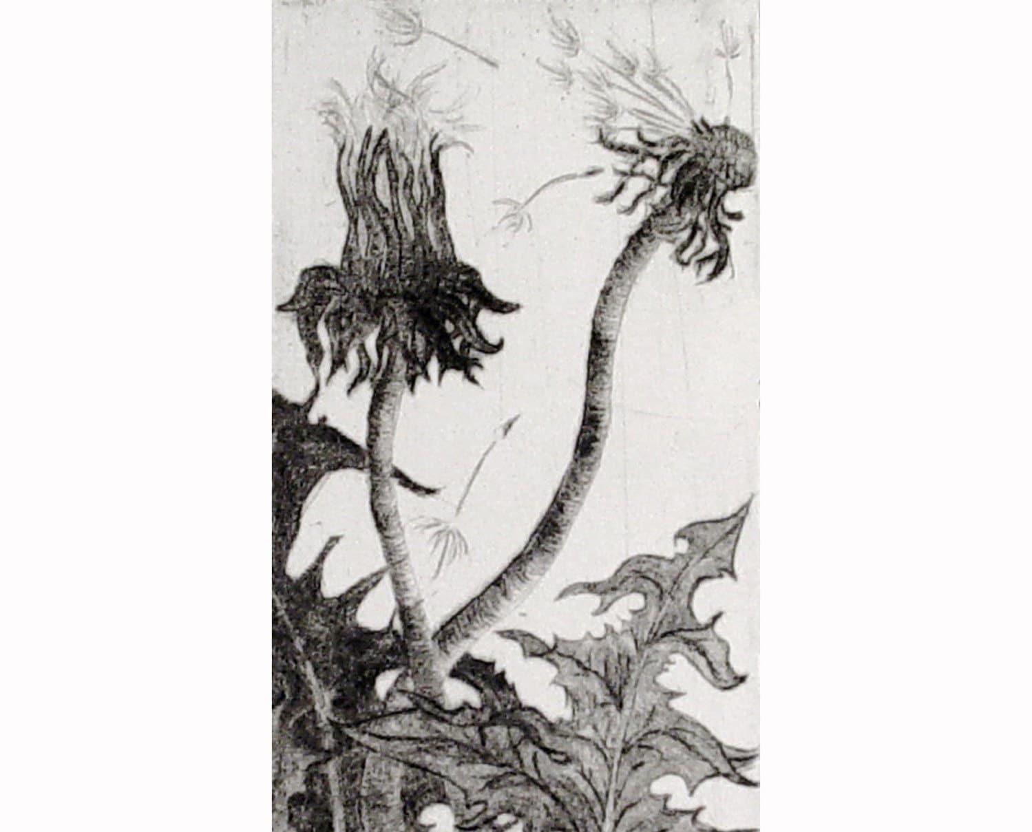 Dandelion (original intaglio print)