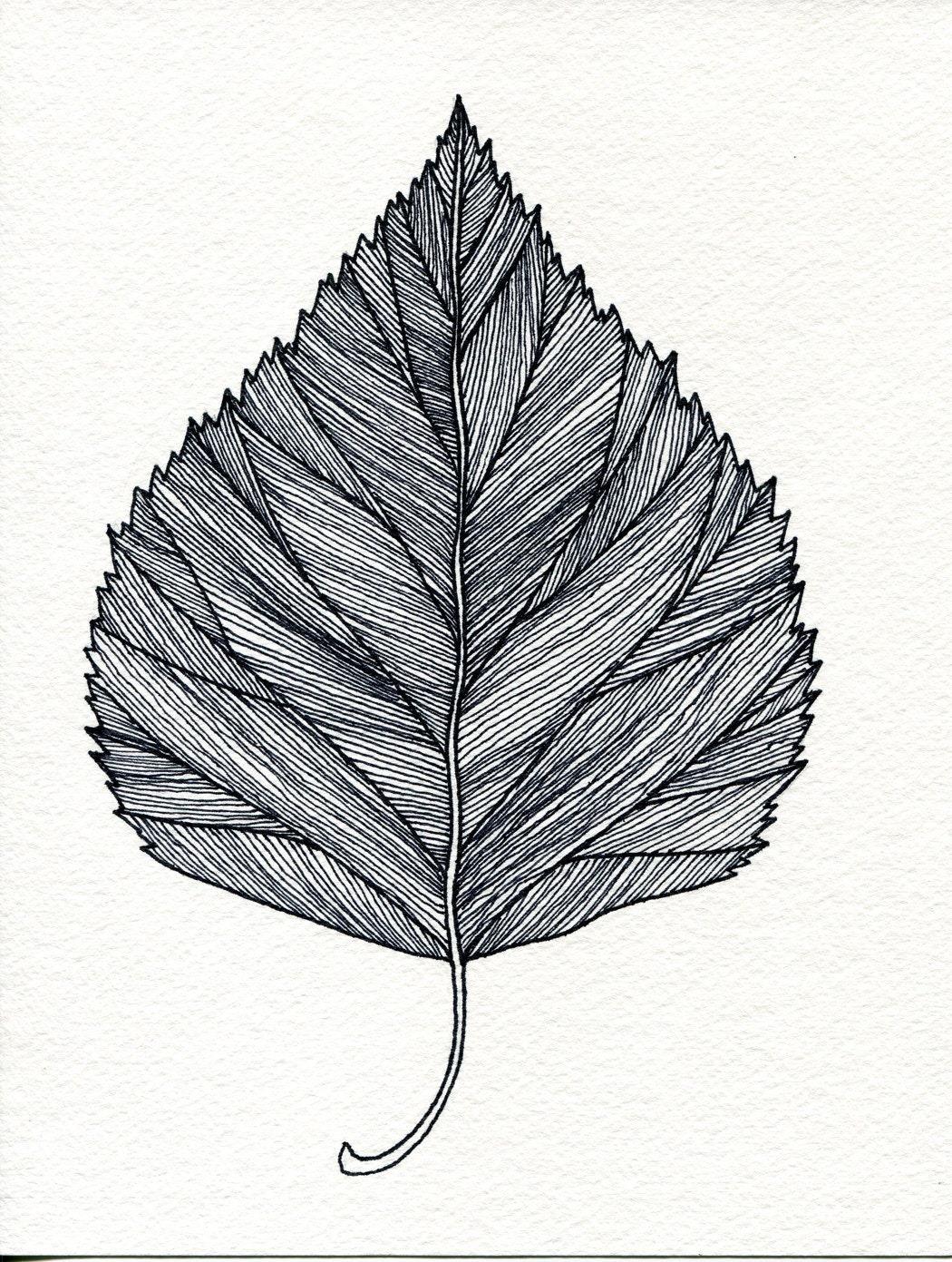 Birch Leaf Print of original pen and Ink drawing - black or green - Bigbrainart