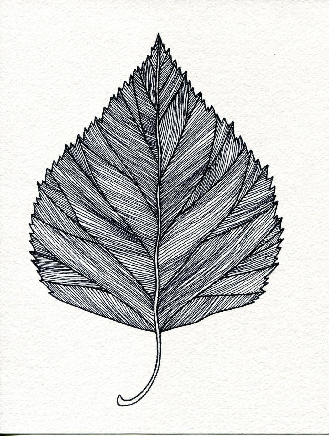 Birch Leaf Print of original pen and Ink drawing - black or green - Bigbrainart