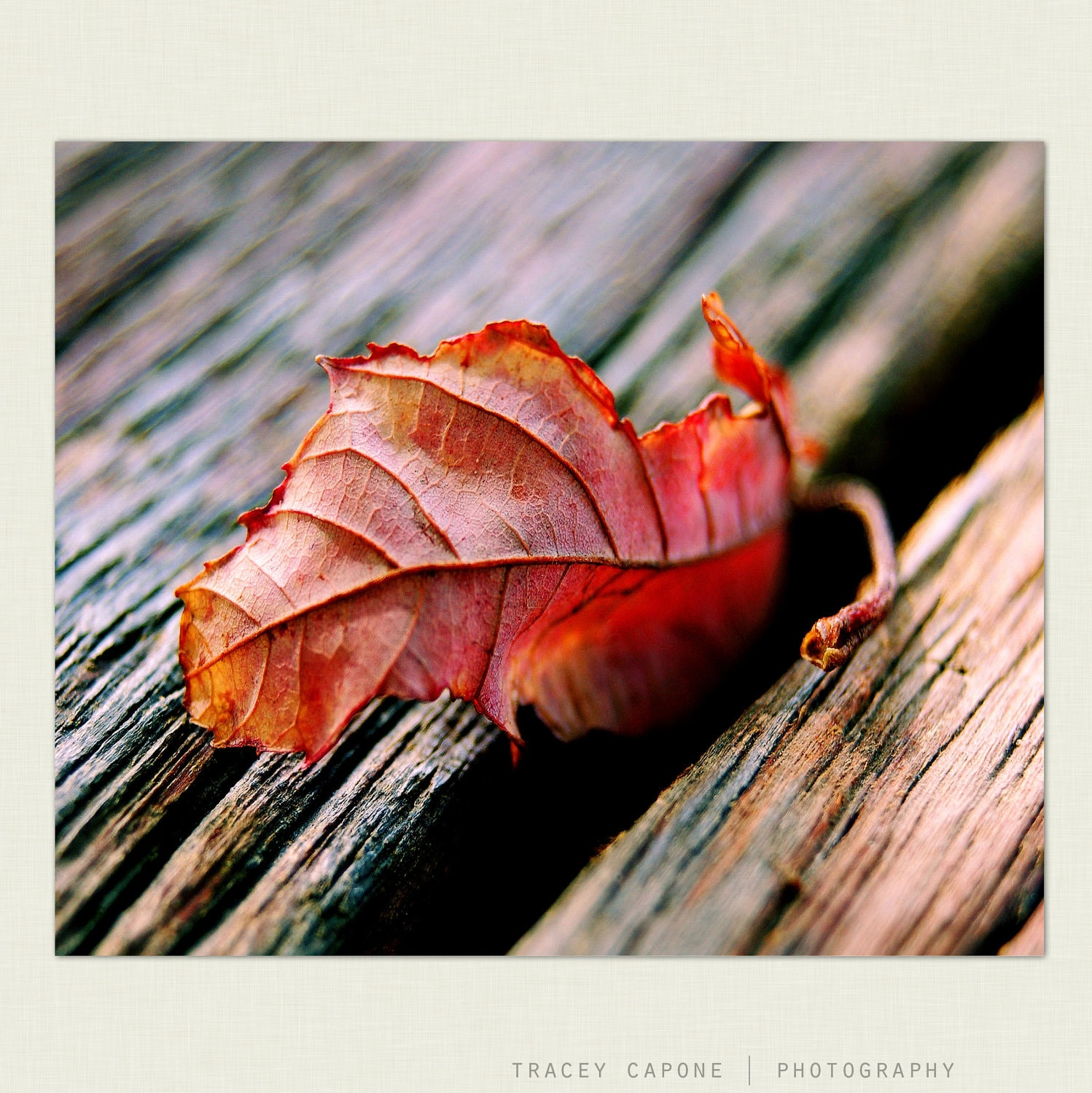 Photography: Autumn Wall Decor, Red Fall Leaf Wall Art - First Leaf of Fall - Autumn photography, fall home decor, crimson red, umber - TraceyCapone