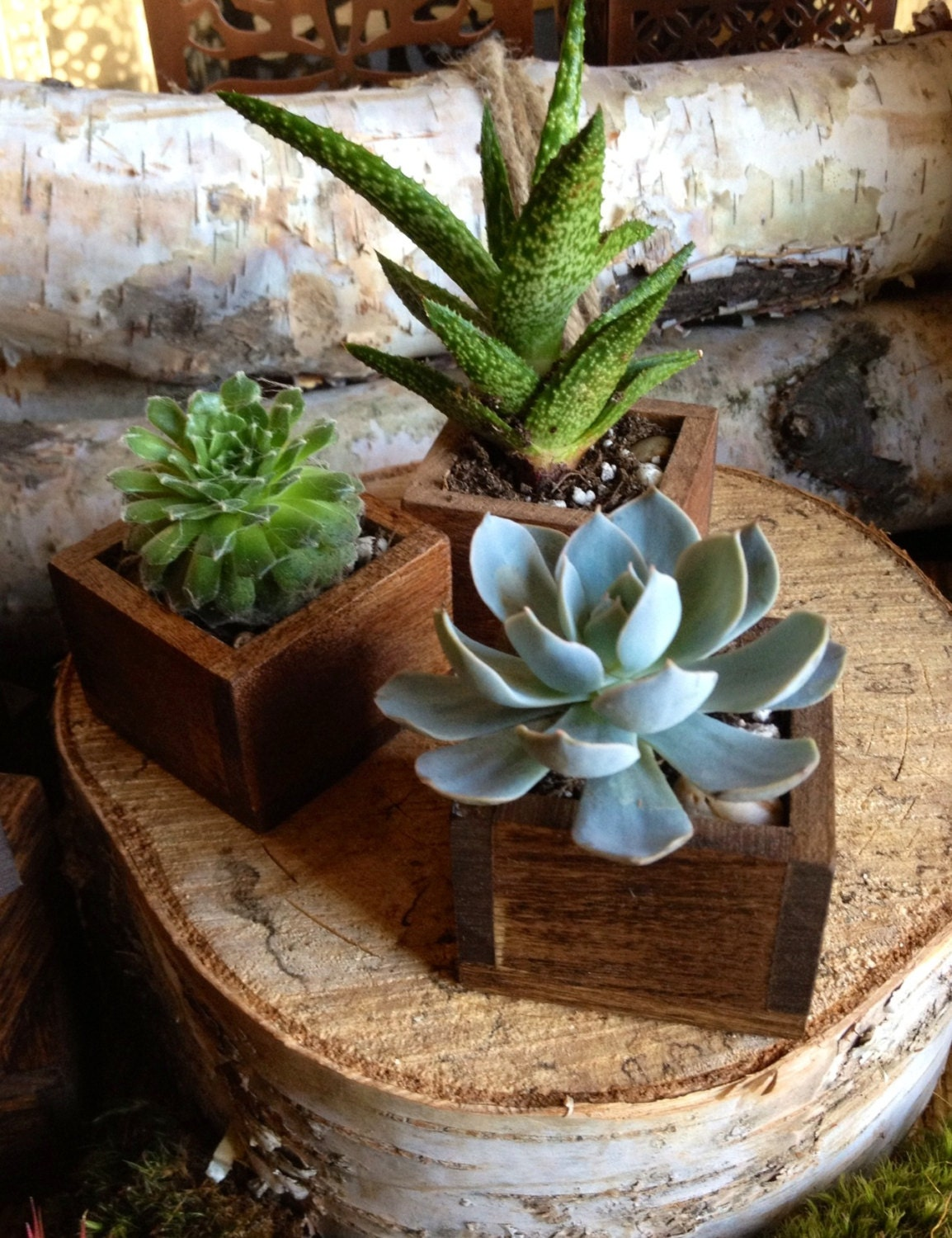 Succulent in a tiny wooden box planter for Home Decor or Wedding Favor. (Stained) Sold individually and can be made to order - TheRedLilyShop