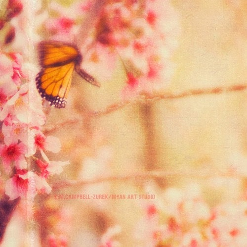 "butterfly photograph ""Blur"". romantic spring cherry blossoms, ethereal dreamy garden nature pink orange - fine art print 5x5 - sixthandmain"