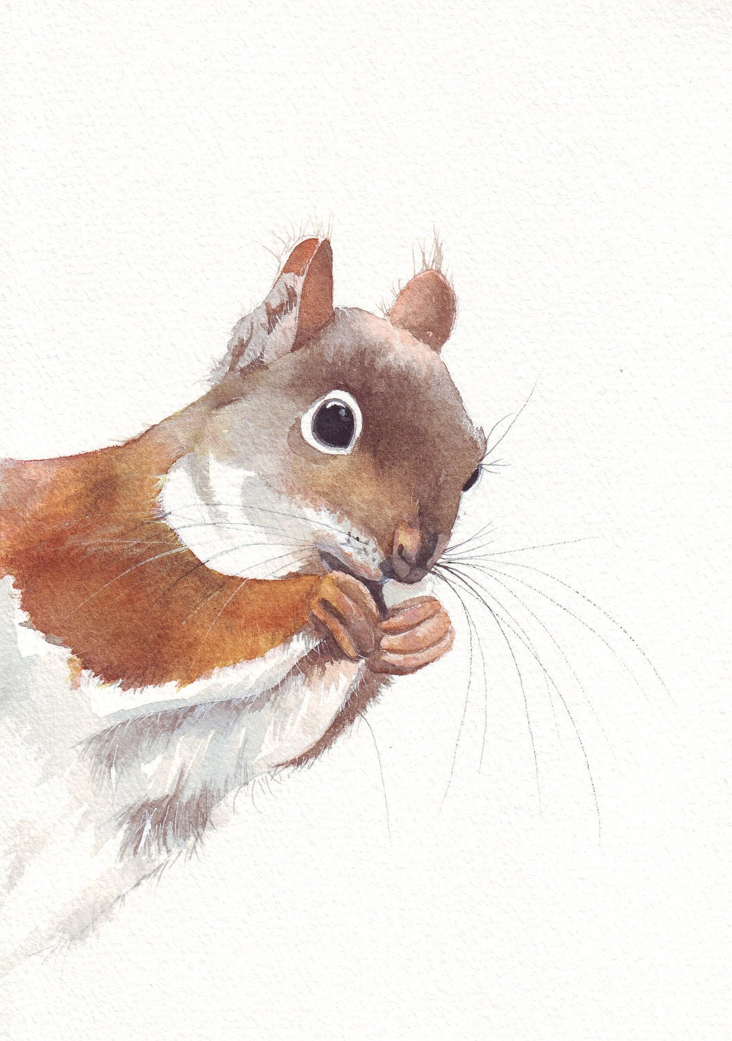 Squirrel art painting No 0071 - animal print of watercolor painting