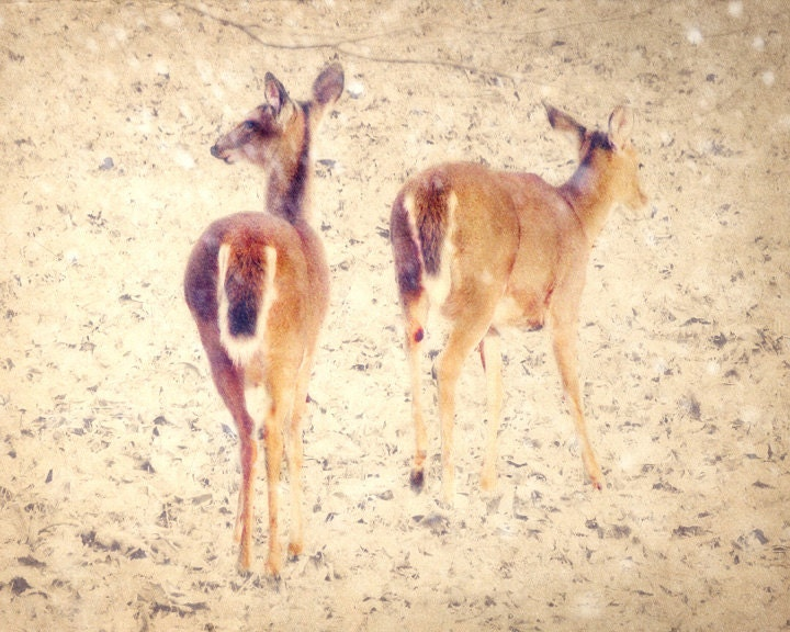 Deer Photography, White-tail Deer in Snow, Tennessee Wildlife Photography, Whitetail Deer Print, brown, beige, white wall art, 8x10 Print - AmyTylerPhotography