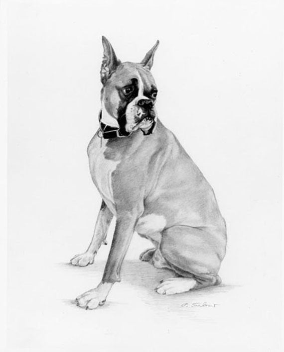 how to draw a boxer puppy