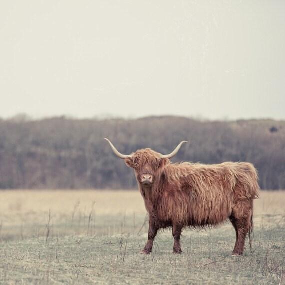 Scottish Highlander 5x5 Photo Print
