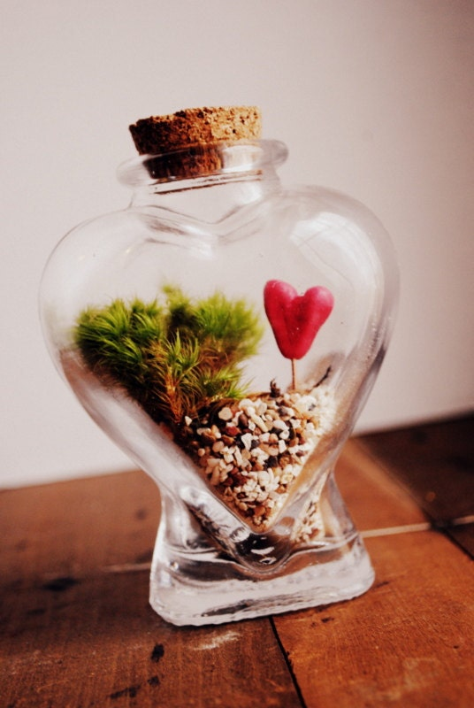LAST ONE in STOCK The Bleeding Heart Terrarium Special Edition