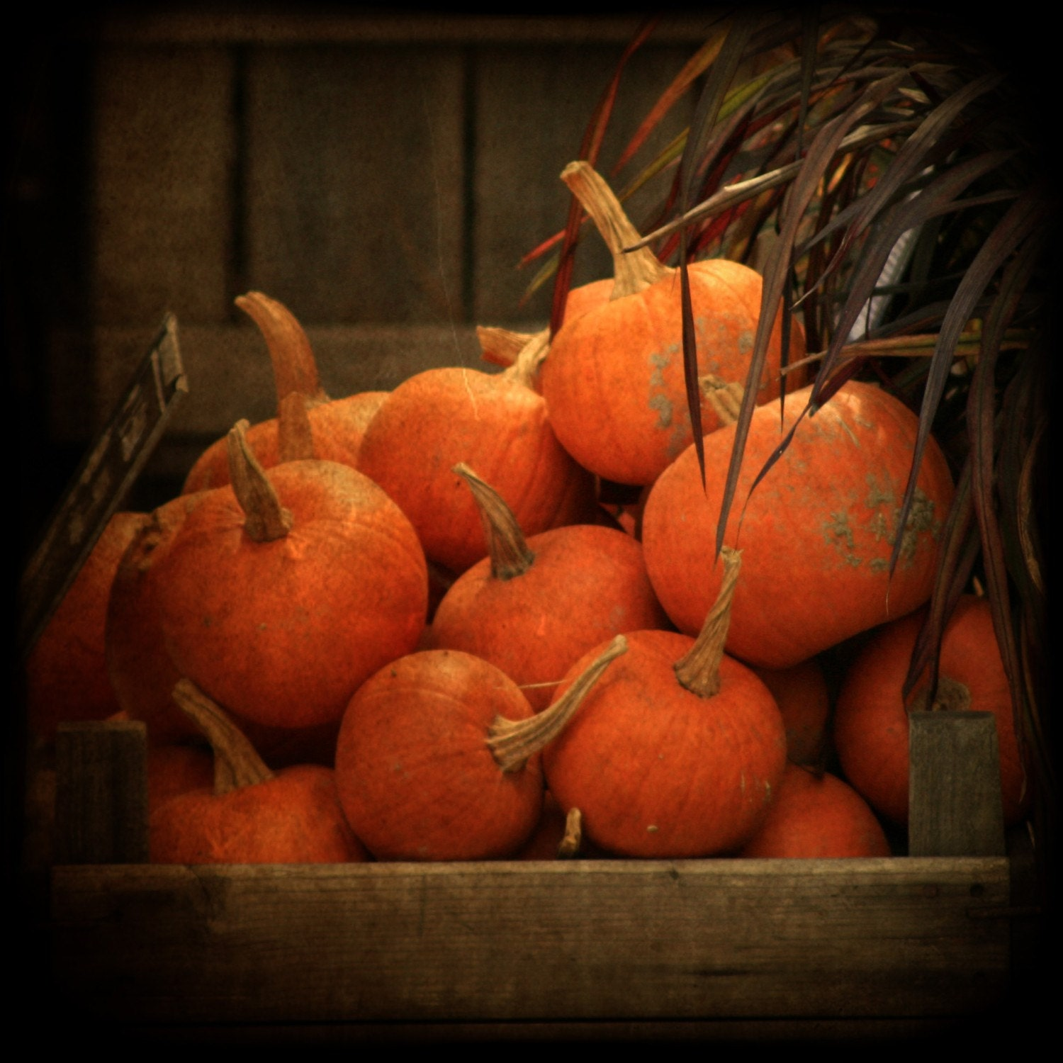 Pumpkin Cart - nature fine art photography print 10x10 BOGO SALE