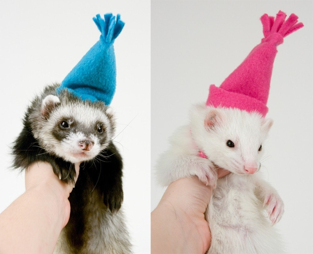 Winter Hats for Ferrets
