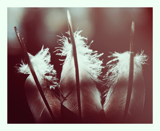 Items similar to Still life Fine art photography. Feathers ...