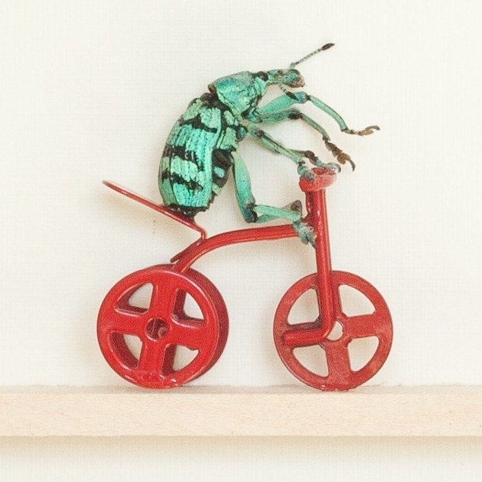 Beetle Riding a Tricycle Carnival Act
