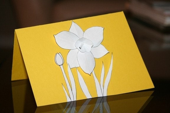 daffodil. drawing. flower