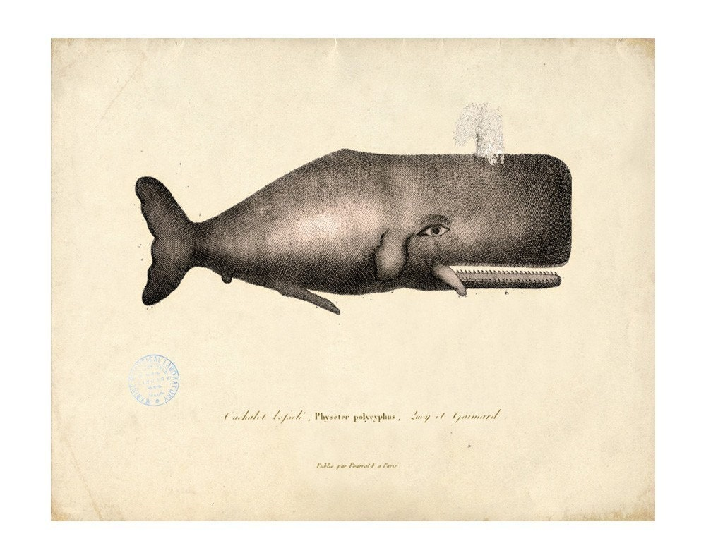 Antique Whale Print No. 3