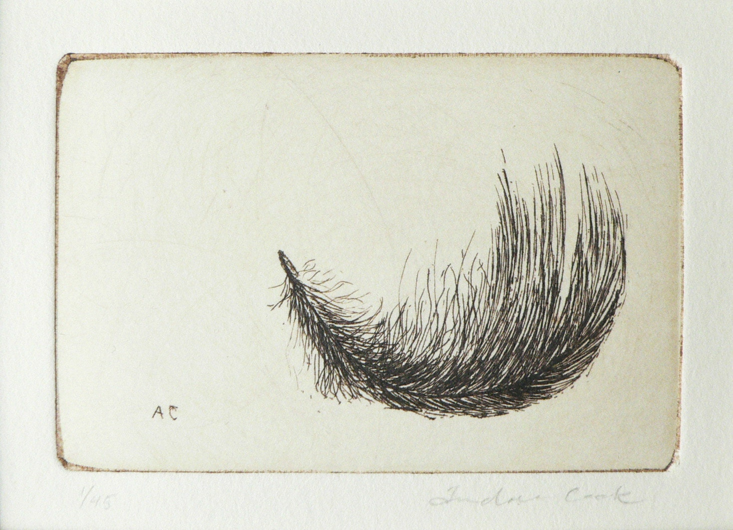 original etching of a feather - atelier28