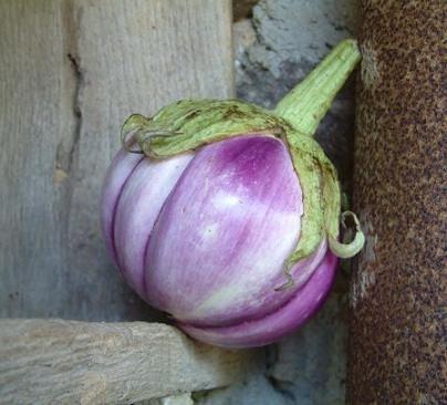 Organic Rosa Bianca Eggplant  Seeds