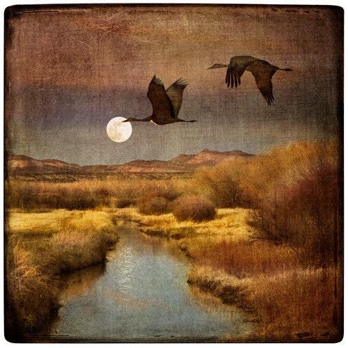 Cranes at Bosque