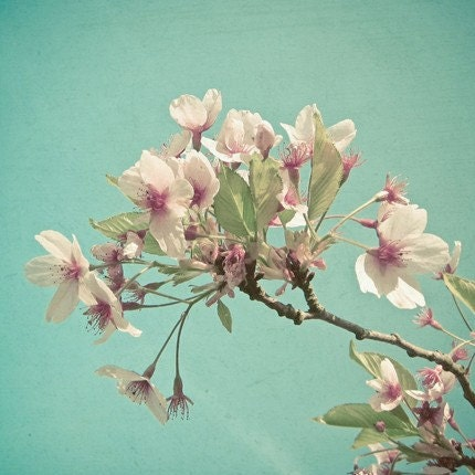 Floral 8 x 8 Print