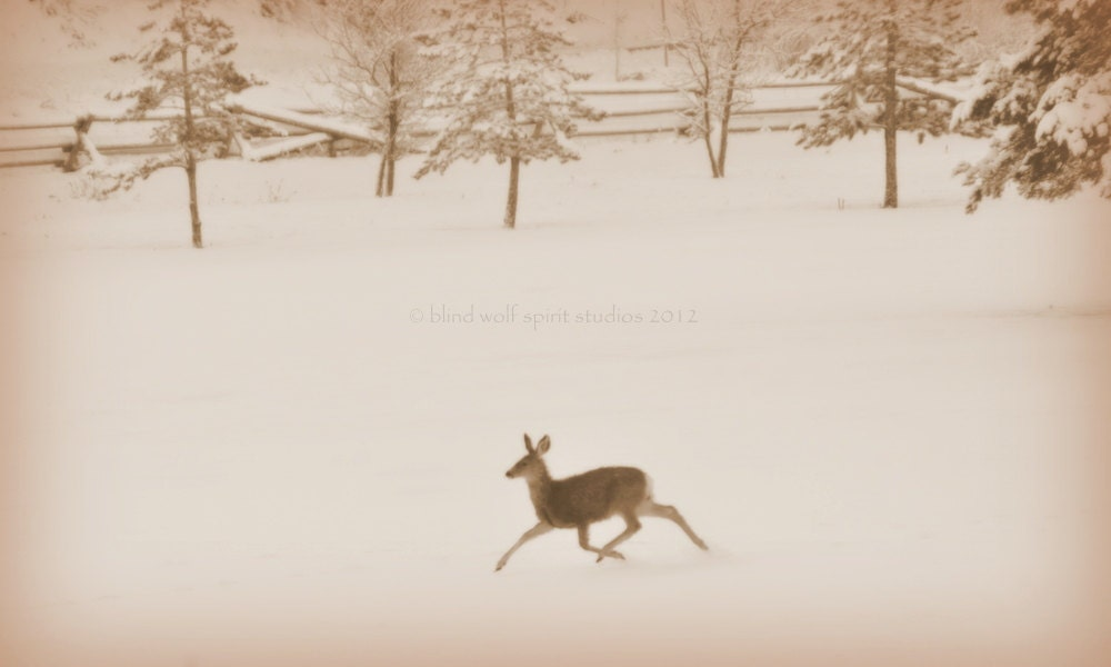 Snowy Deer in the Meadow, Winter Photography, Sepia, Fine Art Photograph - blindwolfspirit