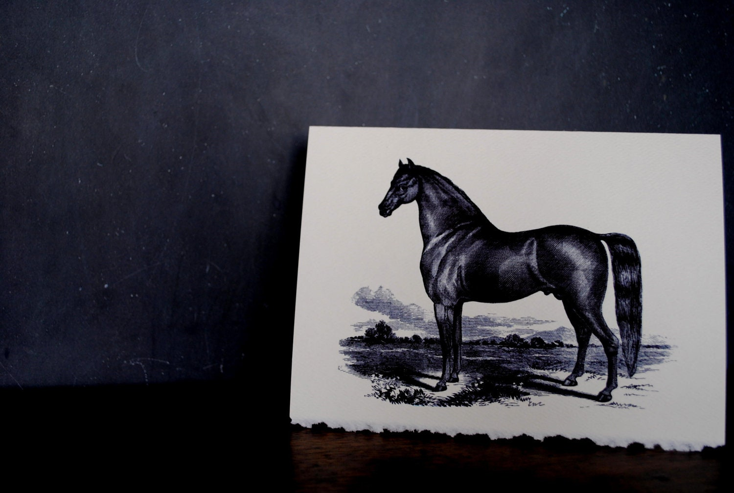 Horse Lover Stationery - 5x7 Note Cards - Set of 6 - Vintage Equine Graphic - TerraDeiFarm