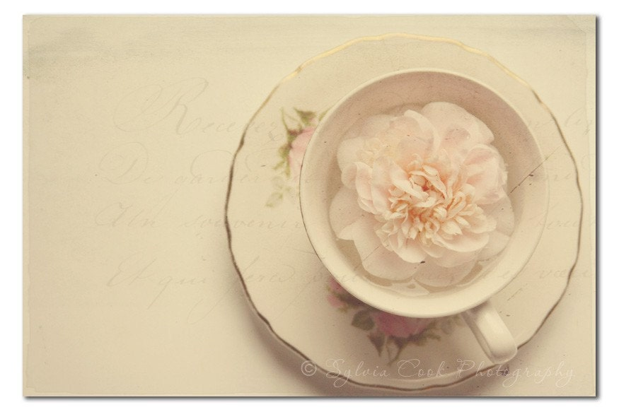Shabby chic tea and camellia 5x7 fine art photographic print