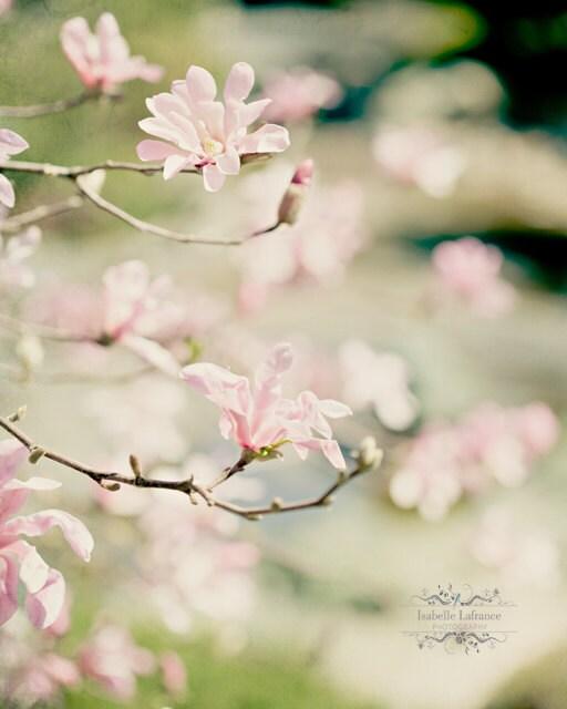Spring Dreaming - IsabelleLafrance