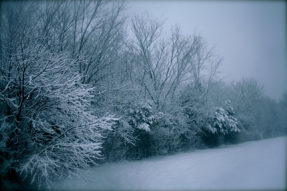 Winter Wonderland. 8x12 Fine Art Photograph. Free Shipping.