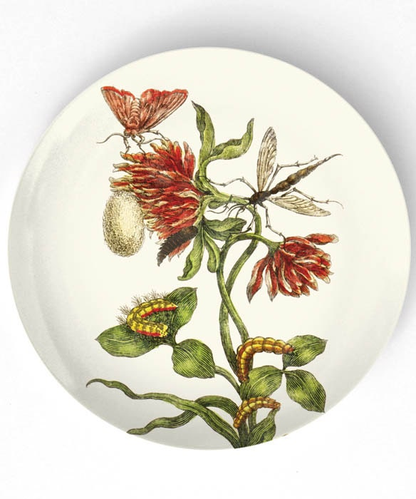 1600's botanical artwork VI - reproduced on 10 inch Melamine Plate - TheMadPlatters
