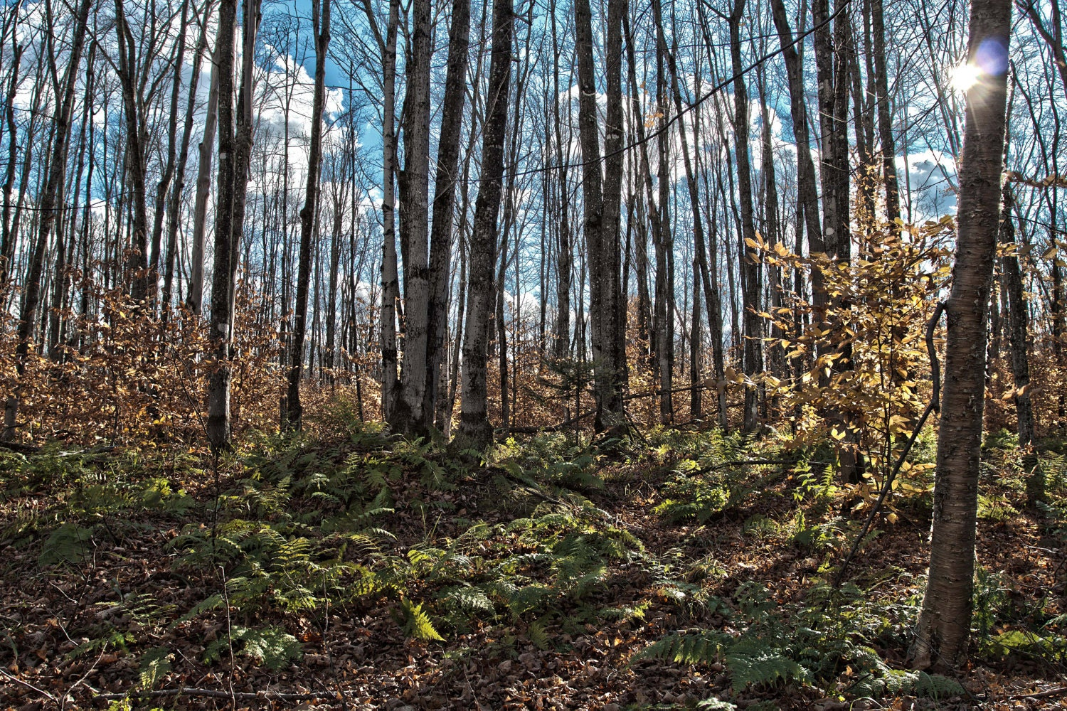 photo of the woods in late fall in the upper peninsula