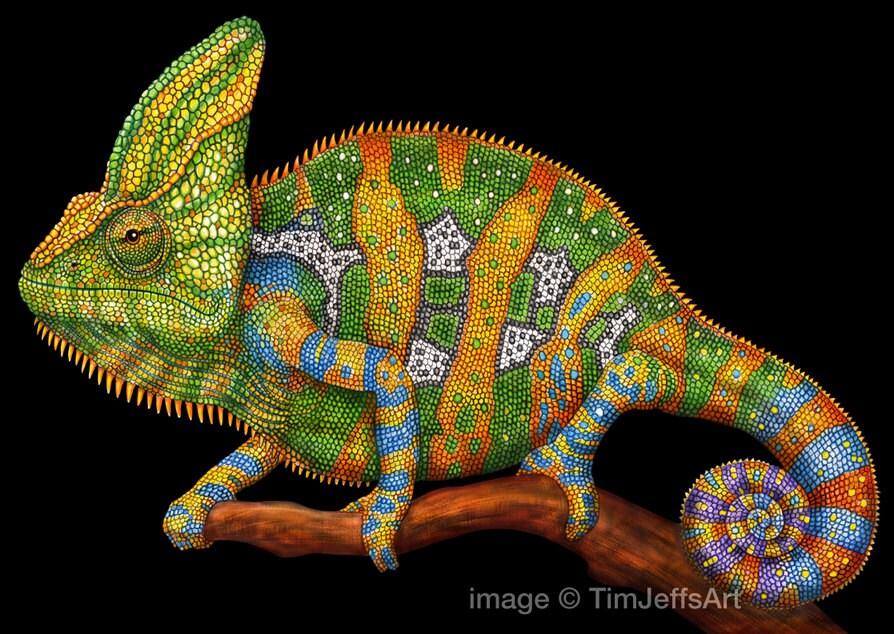 Colorful chameleon art