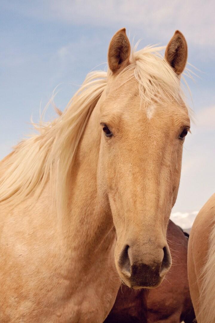 palomino horse color - photo #18