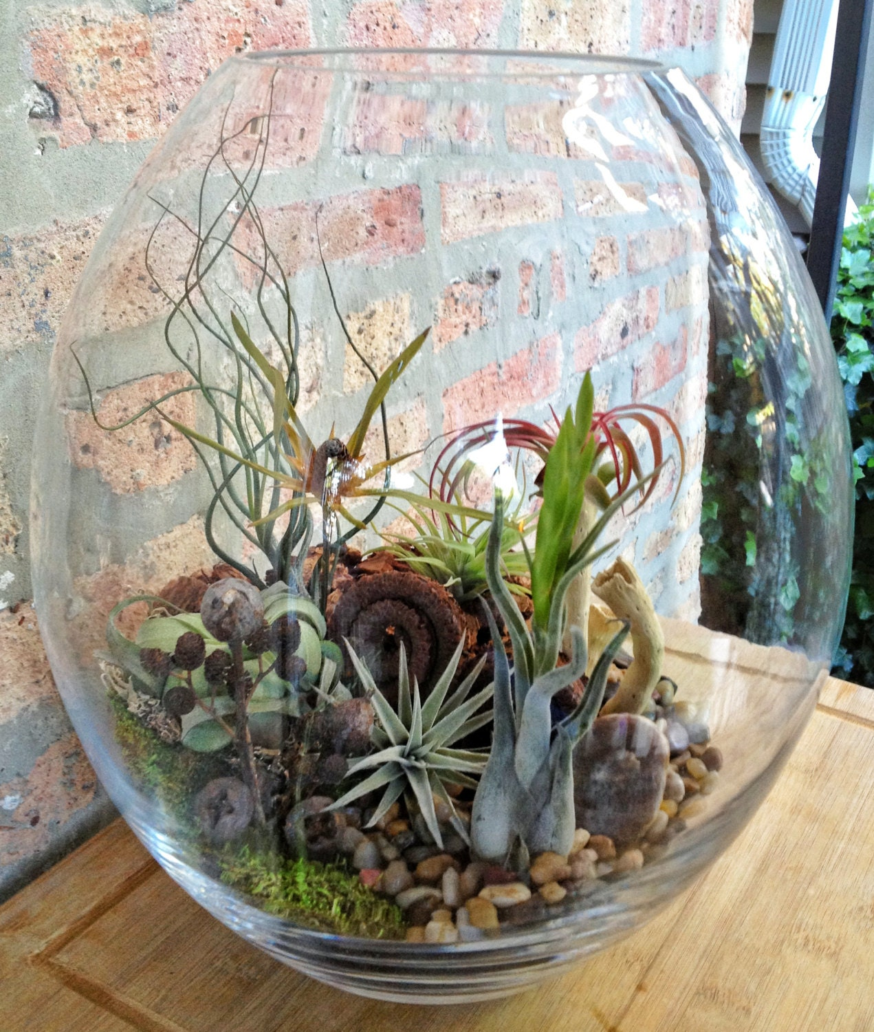 Large easy care low maintenance air plant by lovelyterrariums for Low maintenance air purifying plants
