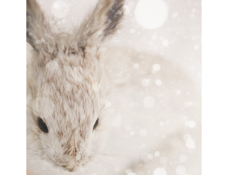 Snow Bunny - Nature Photography, Cute Nursery Art, Animal Print, Winter Snow, Rabbit, White, Beige, Neutral Decor, Minimal - EyePoetryPhotography