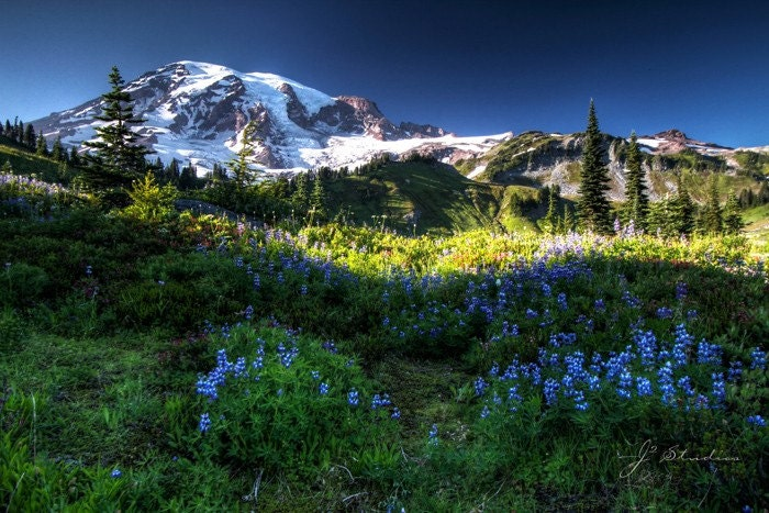 Fine Art Photography Print - MEADOWS (16x24) - Mount Rainier Meadows. Sunset. Wild flowers, Stunning. Breath taking. Vivid. Natural beauty.